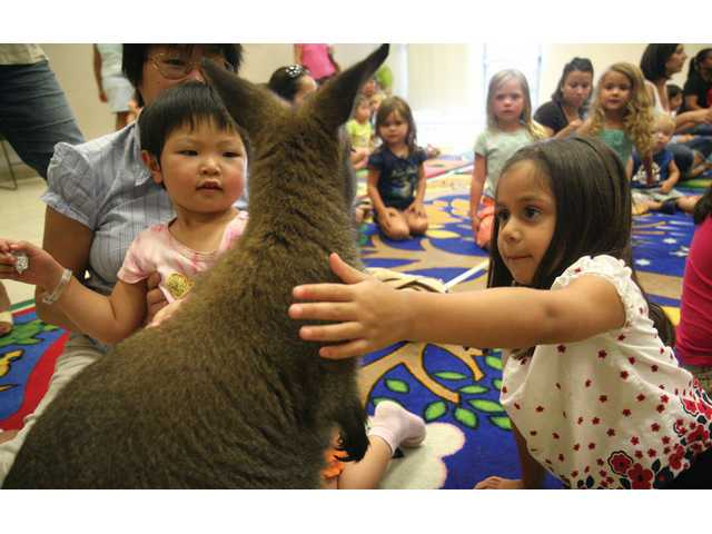 Xinyi Wang, 3, from Valencia, and Alyssa Lopez, 4, from Canyon Country, pet Matilda the Australian Wallaby, one of the many animals brought to a group of kids at the Jo Anne Darcy Canyon Country Public Library. The traveling nature class brought mammals, lizards, snakes, amphibians and invertebrates for an educational hands-on experience for young kids.