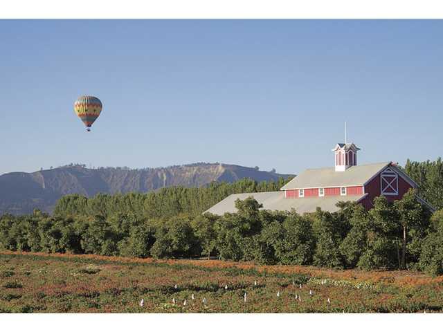 Citrus Classic Hot Air Balloon Festival in Santa Paula