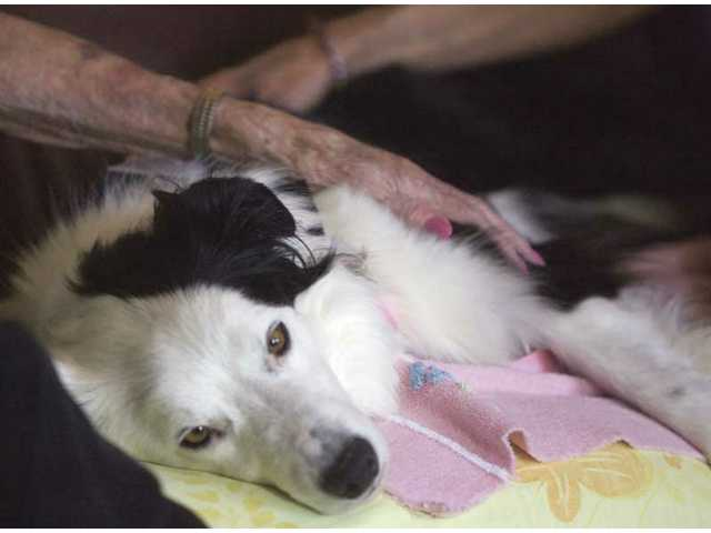 Jess is a DELTA-certified therapy dog who visits with hospice patients at their homes.