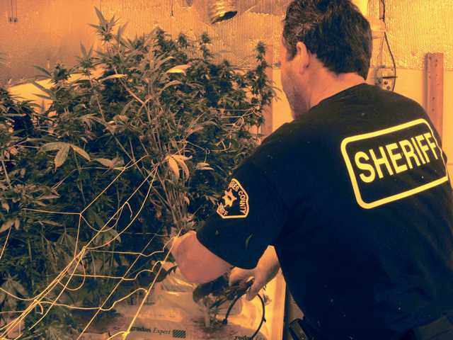 Deputies bust up house full of pot