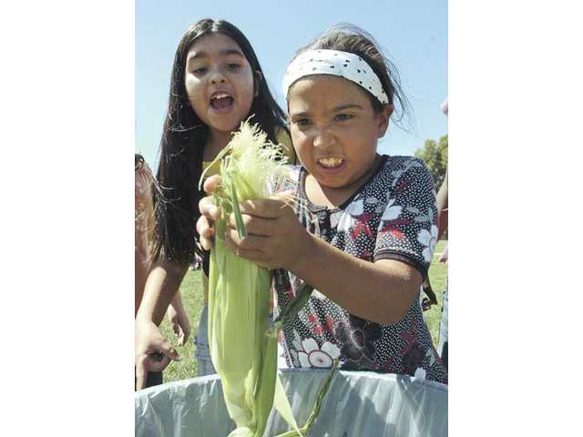 Mint Canyon Elementary School fifth-grader Raiana Martinez, left, cheers on her class-mate Noemi Herrera as she shucks an ear of corn Thursday during a competition between six classes of fourth, fifth and sixth graders.
