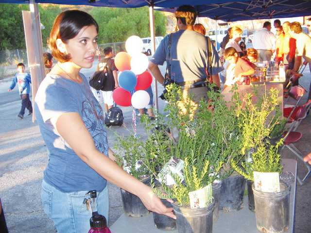 "Heidi Cali selects a plant, distributed by the city to help residents add landscaping to their yards, during Thursday evening's ""Extreme Neighborhood Makeover"" program in the East Newhall area of the city."