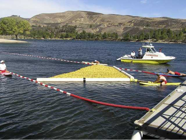 "The start of the Rubber Ducky Regatta. This event is just one in the two days of events that make up this year's Castaic Days Outdoor Festival. Patrons ""adopt a duck"" and the ducks ""race"" across the lagoon, powered by the breeze. Those with the winning ducks receive prizes. Proceeds benefit the Samuel Dixon Family Health Centers."