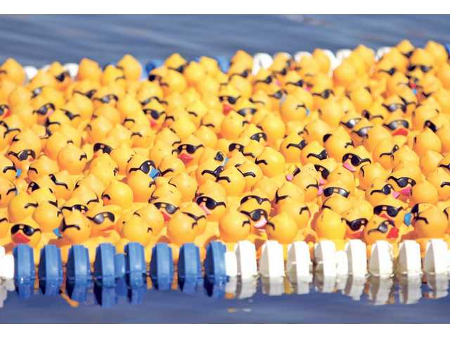 Rubber ducks make their way down Castaic Lake for the 7th Annual Rubber Ducky Regatta event Saturday afternoon. Funds raised at the event go towards local Samuel Dixon Family Health Centers.