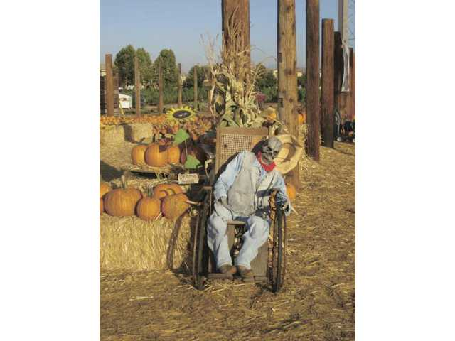 A ghoul in a wheelchair at Nancy's Ranch on Magic Mountain Parkway.