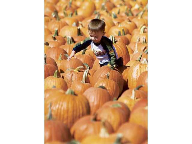 At local Lombardi Ranch, children will find lots of fun activities.