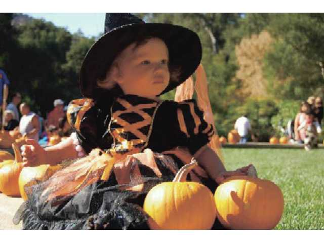 Children get to dress up and participate in the Pumpkin Roundup at Descanso Gardens. Other activities include: free face painting and pony rides, a pumpkin decorating station and rides on the Enchanted Railroad.