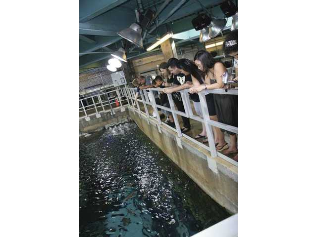 "On the ""Behind the Scenes"" tour, guests feed the marine animals in the giant 350,000-gallon Tropical Reef Habitat."