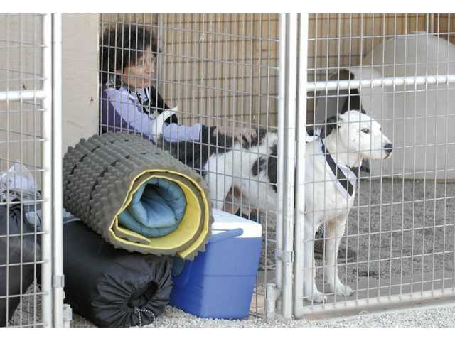 """Gwen Romani of Castaic prepares to spend the night with Charlie, a 6-year-old Terrier blend at the """"A Day in Their Paws"""" fundraiser on Saturday."""