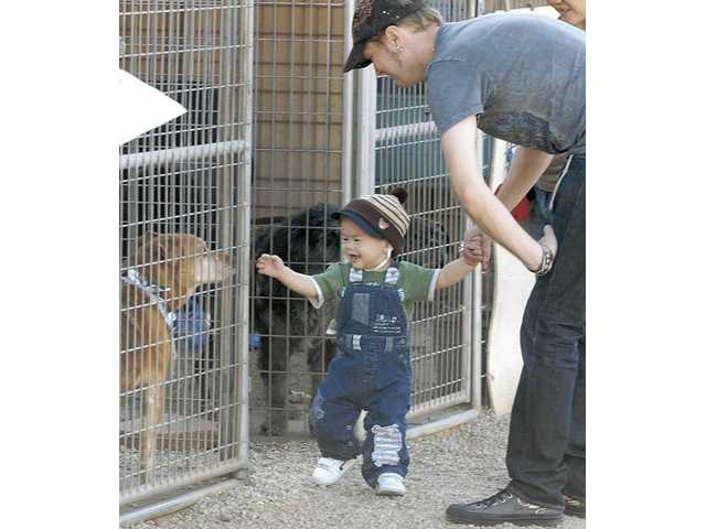 "One-year-old Hunter wendel and his dad, Stephen, meet Tiger, a 12-year-old Shepard mix at the ""A Day in Their Paws"" fundraiser on Saturday."