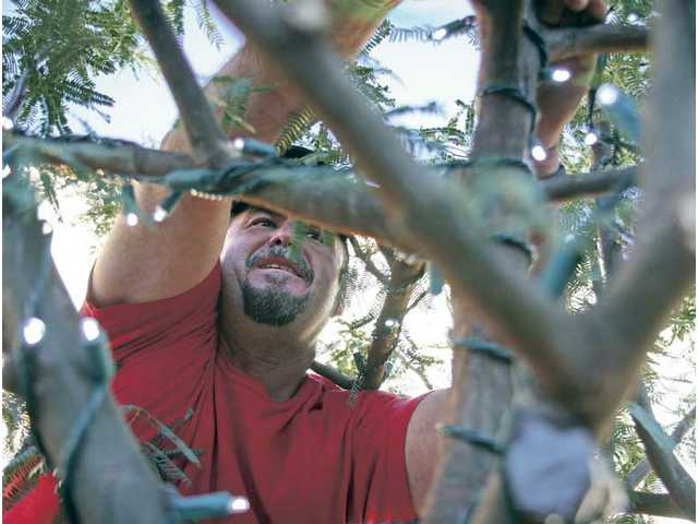Regino Arellano wraps one of the trees on Main Street in Newhall with lights on Monday. A total of 131 strands of lights will illuminate 54 trees in downtown Newhall for the holiday season.