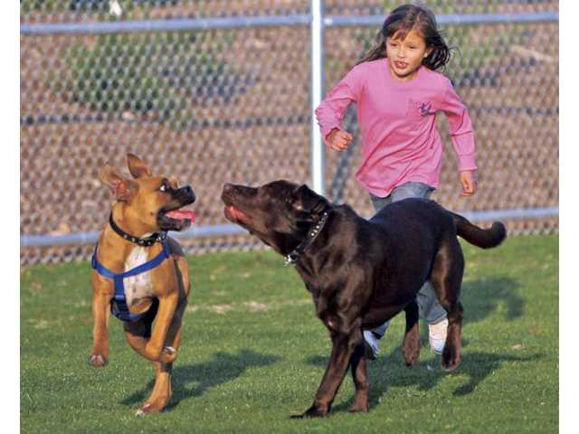 Olivia Vasquez, 7, of Canyon Country, plays with her dog Spike, left, and a new four-legged friend, Max, at the new Canine Country dog park which opened Wednesday at the Santa Clarita Sports Complex. The facility also opened new basketball courts during the Phase 4 ribbon cutting.