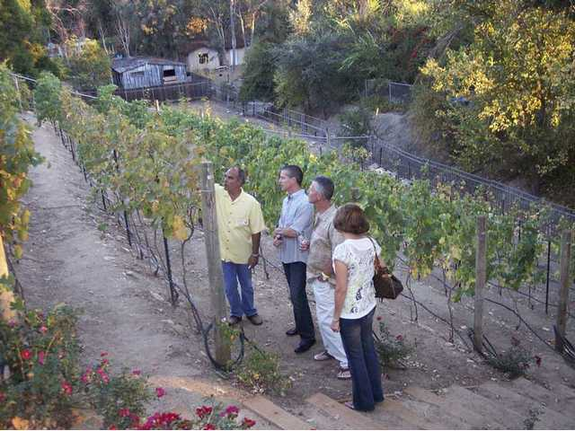 Tim Carpenter, left, brother of Chris Carpenter, shows guests the vineyard of 200 vines planted by the brothers.