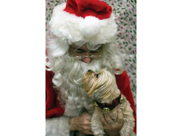Santa and Bella meet each other before being photographed for the Pet Photos with Santa Saturday afternoon at the Pet Stop store in Canyon Country.