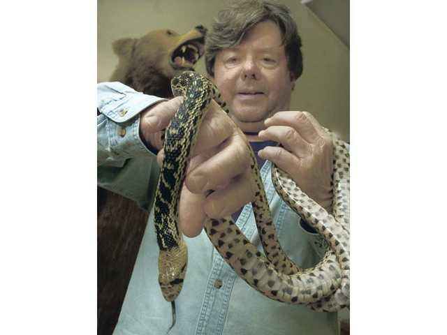 Placerita Canyon Nature Center Association Vice President Ron Kraus holds a gopher snake named Sylvester, on Tuesday. The snake is a teaching tool used during the docent training program at the Placerita Nature Center.