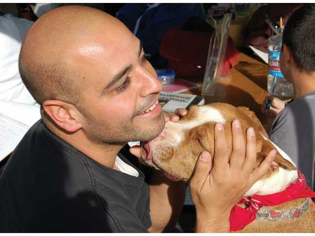 Eddie Ortiz of Canyon Country gets acquainted with Loren, one of 10 Brittany Foundation dogs awaiting adoption at Heart of the Holidays at Whole Foods on Dec. 19. The Ortiz family placed an adoption application for the pit bull mix that day.
