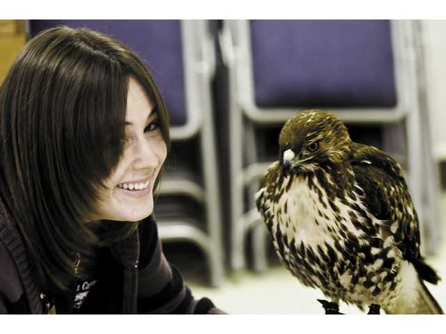 Jessica Nikolai handles Kia, a red-tailed hawk during the center's live animal show.