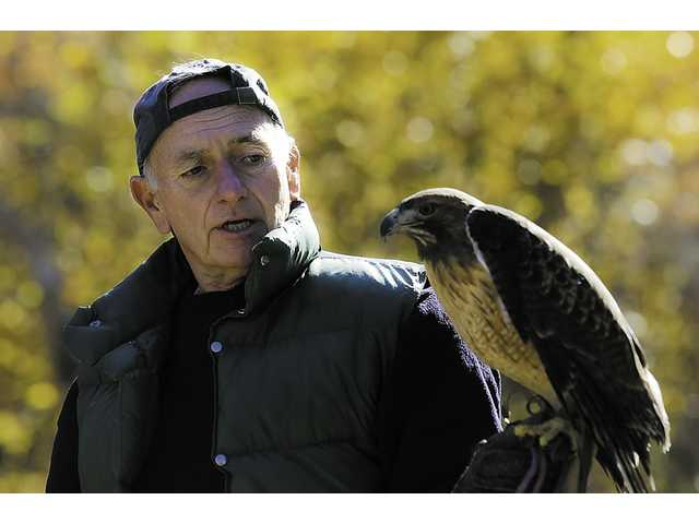Roger McClure, a docent at the Placerita Canyon Nature Center, shows and talks about Kia, a red-tailed hawk, during the center's live interactive animal show.