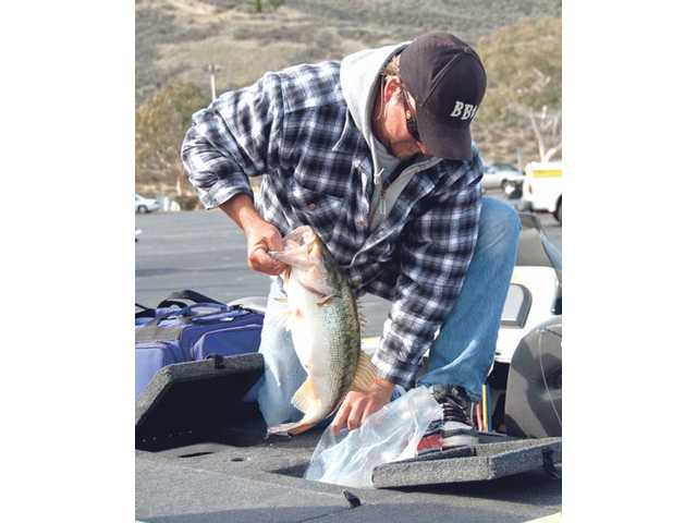 Ron Thompson, of Acton, gets his 7.84-pound, award-winning bass ready for the weigh-in at the Ron Smith Celebration of life held Dec. 20 at Castaic Lake.