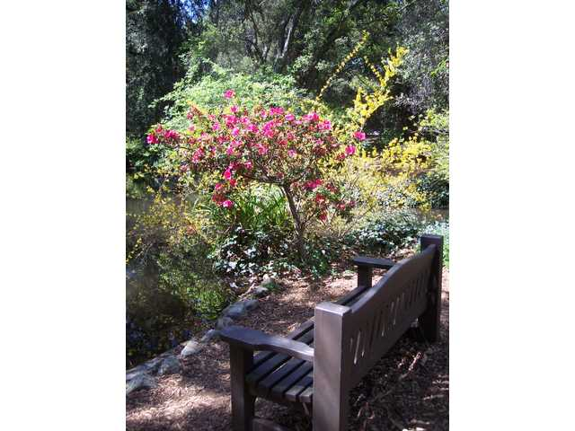 Stop and sit a spell... benches and water features abound throughout the grounds at Descanso Gardens.