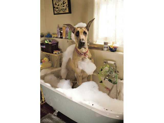 "Marmaduke the dog is shown in a scene from, ""Marmaduke."" Young children may like it but few others will."