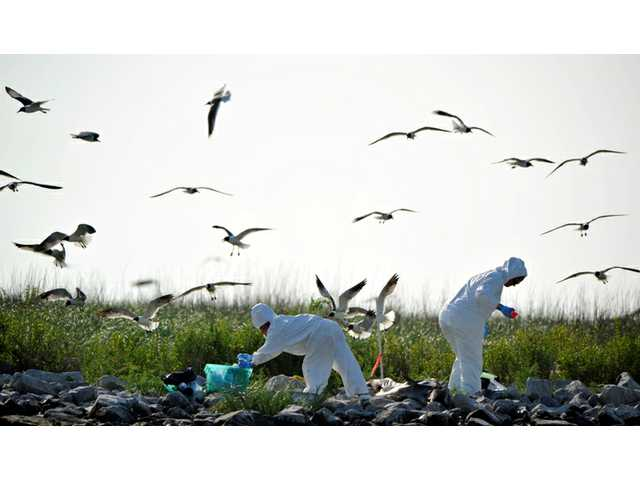 AP IMPACT: BP spill response plans severely flawed