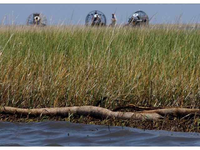 Absorbent boom collects oil from the Deepwater Horizon spill, Thursday, June 10, 2010, in the Bay Barbeau marshlands near Chauvin, La..