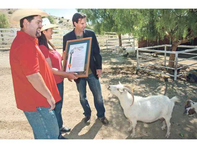 The efforts of Ellie Laks, who founded The Gentle Barn Foundation animal rescue in Saugus, were recognized by Cameron Smyth, R-Santa Clarita, on behalf of the California Legislature's Animal Protection Caucus for her service to the community. The barn is currently trying to raise $100,000, which will be matched by a private donor, to help take in 60 malnourished dairy cows that were so sick that a slaughterhouse wouldn't accept them.