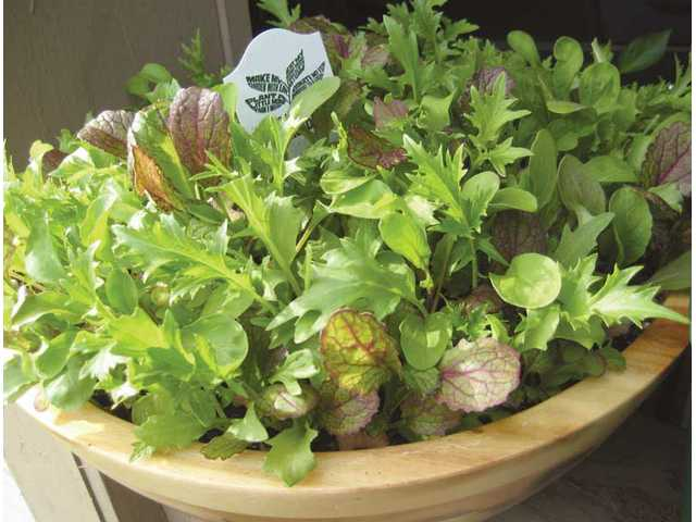 Most herbs and vegetables are suitable for growing in containers and can be grown from seeds or purchased as seedlings. Be sure to choose the right size container for your garden.
