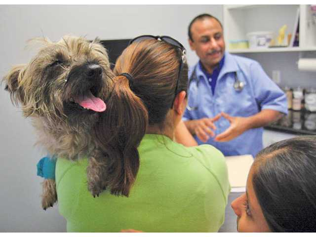 Dr. Baljit Grewal talks to Leticia Cervantes, center, and Emily Cervantes about the condition of her dog at the Valencia Veterinary Center on Monday afternoon. The dog went missing for a week but was later found by a security guard.