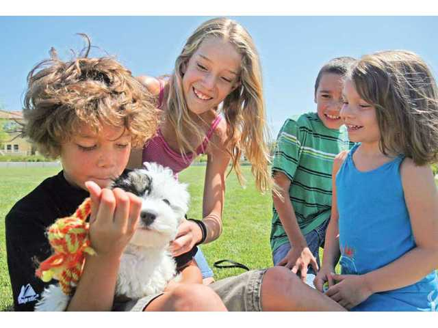 From left to right, Hunter Smith, Dakota Smith, Justin Young and Payton Young gather around Patches Smith, a 3-month-old cavachon at the Canines and Coffee event on Saturday afternoon at the Terry Miller Memorial Park in Valencia.