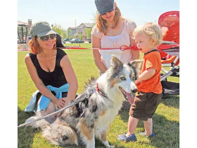 From left to right, Katie Grant, Amy Via and 2-year-old Jackson Via get a closer look at Spark, a blue merle border collie during the Canines and Coffee event.