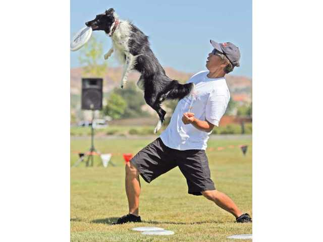 Benny Wong and Skid, a 2-year-old border collie, perform tricks at the Canines and Coffee event held at Terry Miller Memorial Park on Saturday morning. The event was hosted by Newhall Land Development Inc. and Lennar Corp.