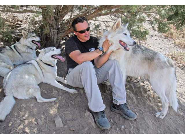 Alfero, founder of Wolf Connection, an animal rescue in Agua Dulce that specializes in wolf dog breeds, plays with a pack that the center takes care of.