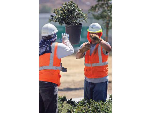 Armando Lopez, right, throws a potted plant to co-worker Jose Giatan, as they organize the plants near the traffic roundabout on the Interstate 5 Hasley Canyon Road exit on Aug. 20.