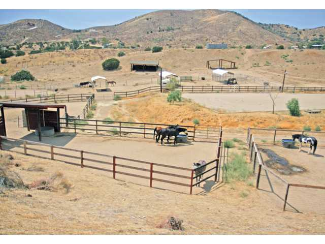 Tammy Craven's 10-acre ranch houses 11 female and two male horses. The big property, and her love of the animals, has allowed Craven to house these horses which she rescued.