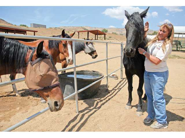 Tammy Craven at home with Elton one of the 98 horses she has rescued in the last five years through the Canyon Creek horse rescue. After finding homes for almost all, Craven decided to keep 13 of them for her own.