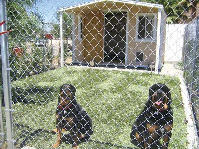 Beau and Sugar sit in front of a bungalow at the New Leash on Life, a no-kill animal rescue shelter in Placerita Canyon. The nonprofit now offers kennel boarding services in order to remain open and continue rescuing dogs.