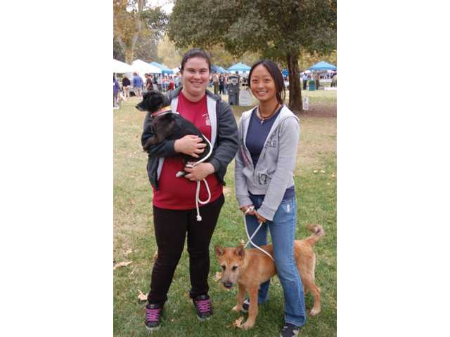 Volunteers from Lancaster Shelter, one of six Los Angeles County animal shelters that participate in the fair, walk available dogs to attract potential adopters.