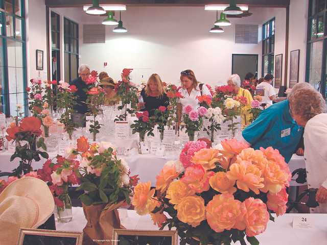 The Wild West Roses rose show hosted by the Santa Clarita Valley Rose Society will be held next Saturday at Hart Hall in Newhall. Residents are invited to exhibit their roses for a chance to win one of 76 prizes awarded during the show.