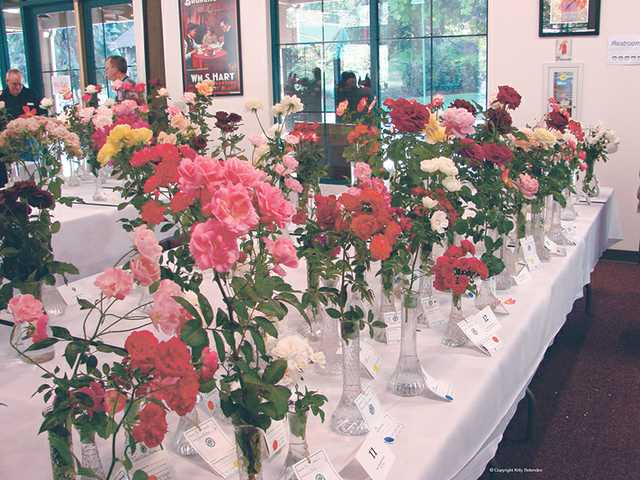 Colorful roses bring grace, beauty and fragrance to Hart Hall in Newhall at last year's rose show hosted by the Santa Clarita Valley Rose Society. The event is free.