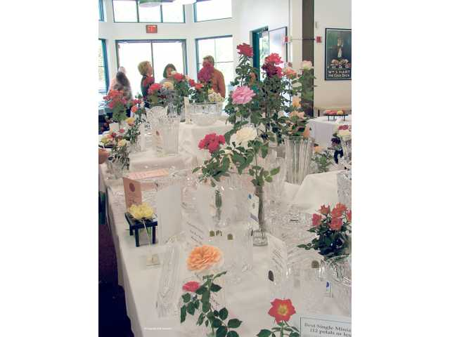 Roses can be entered in a variety of categories at the 17th annual SCV Rose Society Rose Show to be held next Saturday.