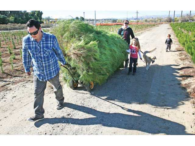 Randy Smith pulls a wagon carrying a 12-foot Christmas tree his family selected at Nancy's Ranch in Santa Clarita on Saturday. His wife, Michelle; daughter Meadow, 5; family dog Emily; and Kaisen, 2, right, try to keep up.