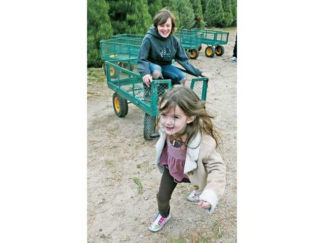 Caroline Holt, 4, of Valencia, pulls her brother Jonathan, 12, in a tree wagon as their family visits the tree farm.