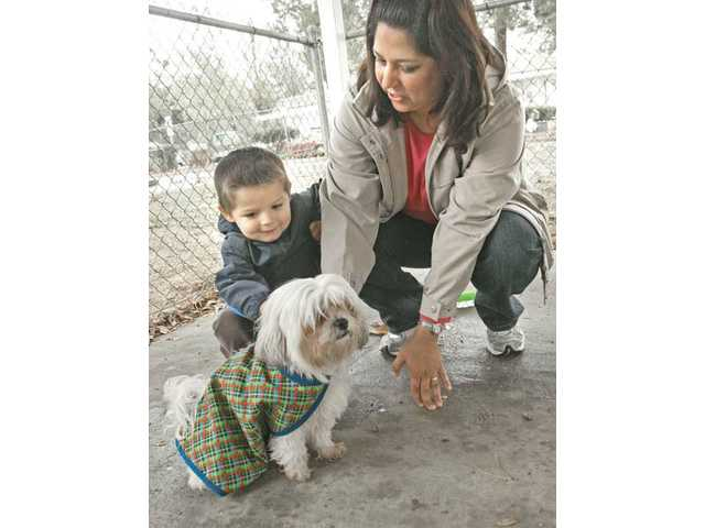 Justin, left, and his mother, Sandra Hamilton, of Valencia, get ready to adopt Scout at the Castaic shelter.
