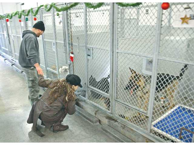 From left, Tom and Lorena Rains, of Newhall, look for a dog to adopt at the Castaic Animal Shelter during its Happy Pawlidays pet-adoption event Saturday.