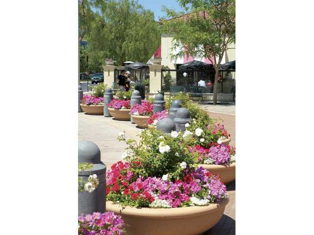 Stay Green was named one of the largest 150 landscape contractors in the nation. The company maintains the lush landscaping at the Westfield Valencia Town Center, one of its many clients in Santa Clarita and Southern California.