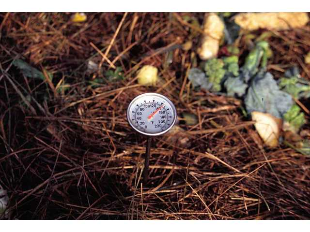 Get a long-probed compost thermometer and see the dial go as high as 160 degrees, which is hot enough to quickly kill nearly all pests. A week at 100 degrees has the same killing effect.