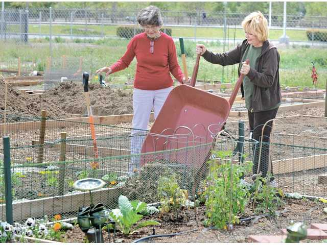 Gardeners Suzanne Bourg, left, and Sharon Chetalo, right, pour a load of mulch between their gardening plots at the Community Gardens at Central Park.