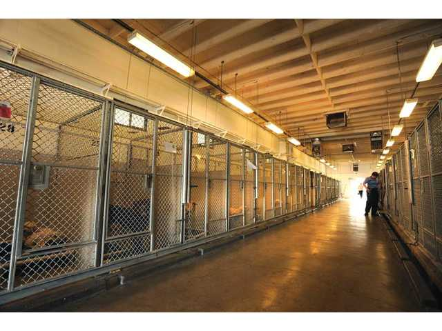 The shelter also needs new lighting in its kennels so people can see the available animals better.